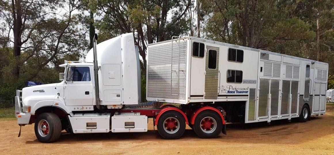 Liver Fluke – Professional Horse Transport